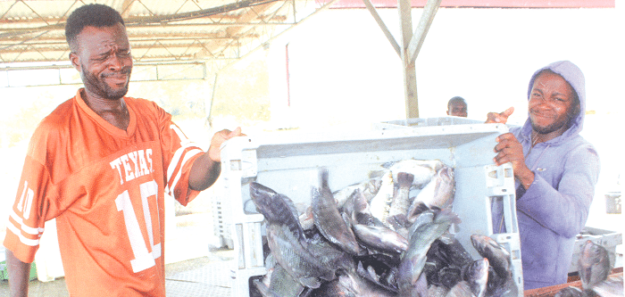 Ghana issued accreditation to inspect, certify fish products for export